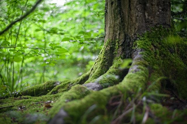 Holz, ein äußerst vielseitiger Werkstoff