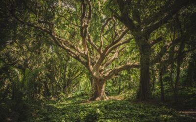 Forstwirtschaft, wie es nicht sein soll