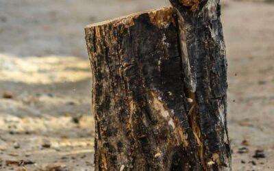 Ist Heizen mit Holz wirklich klimafreundlich?